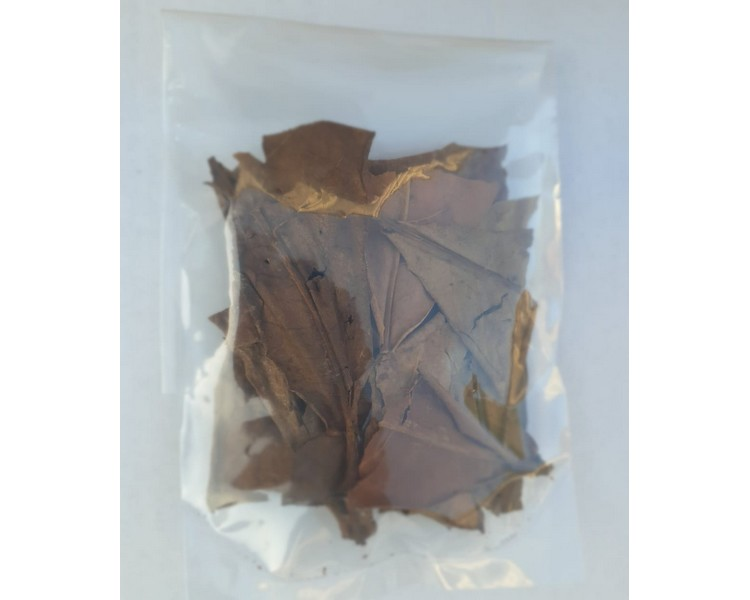 10G Bag of Indian Almond Leaves