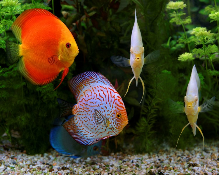 Assorted Discus 2.5""