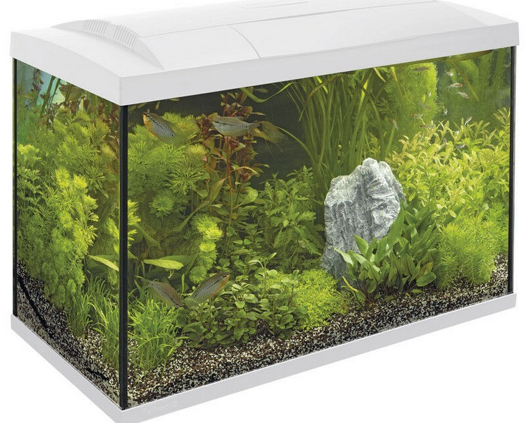 Superfish Start 70 Tank - Complete Set Up - White 70L